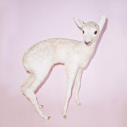 Linus Lohoff bambi_superstar