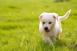 Recommendations for new #puppy owners. #VCAAnimalHospitals