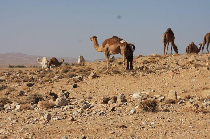 A Jordânia tem 3 estradas que ligam o norte ao sul, a Estrada do Deserto, a Estrada do Mar Morto e a Estrada do Rei. Nós optámos por atravessar esta última.