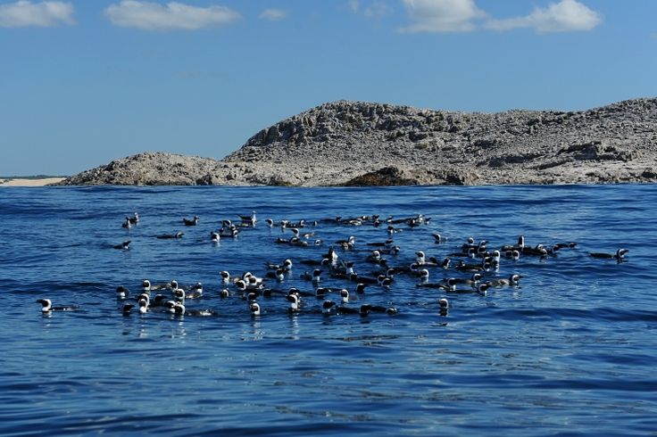 Penguin Boat Tour in Port Elizabeth. St. Croix Island is home to 22,000 breeding pairs of African penguins