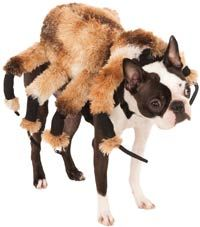 Giant Spider Costume for Dogs http://www.doggiechecks.com/costumes/Spider.php