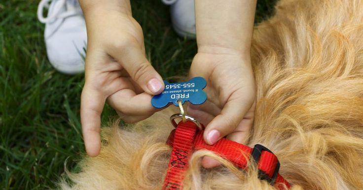 Como tirar as medidas de seu cão para usar a coleira peitoral. No passado, as coleiras peitorais eram utilizadas apenas por cães de busca e resgate ou cães de serviço para pessoas deficientes. Hoje, porém, os donos de animais estão encontrando várias utilidades para esta coleira em cães domésticos. As peitorais com alças integradas podem ajudar os donos a auxiliar seus cães depois de uma cirurgia, e diminuir ...