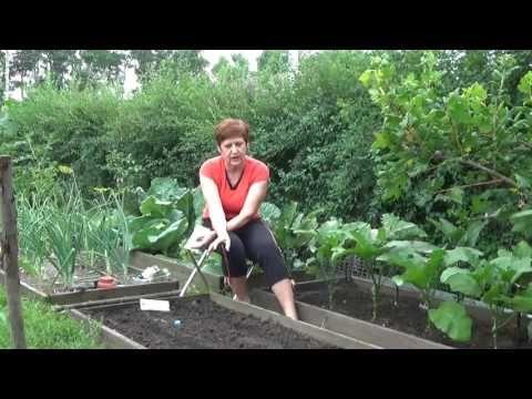 (2) Августовские посевы на свободную землю - YouTube