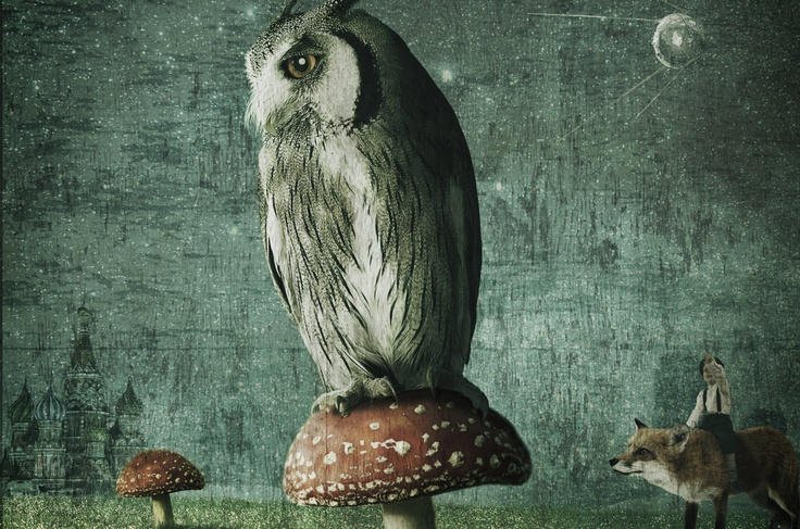 an owl on a toadstool - mark holthusen