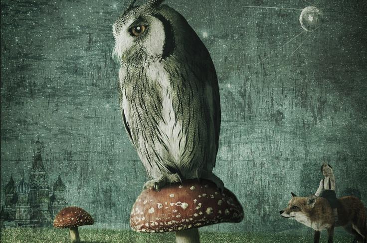 an owl on a toadstool - mark holthusen