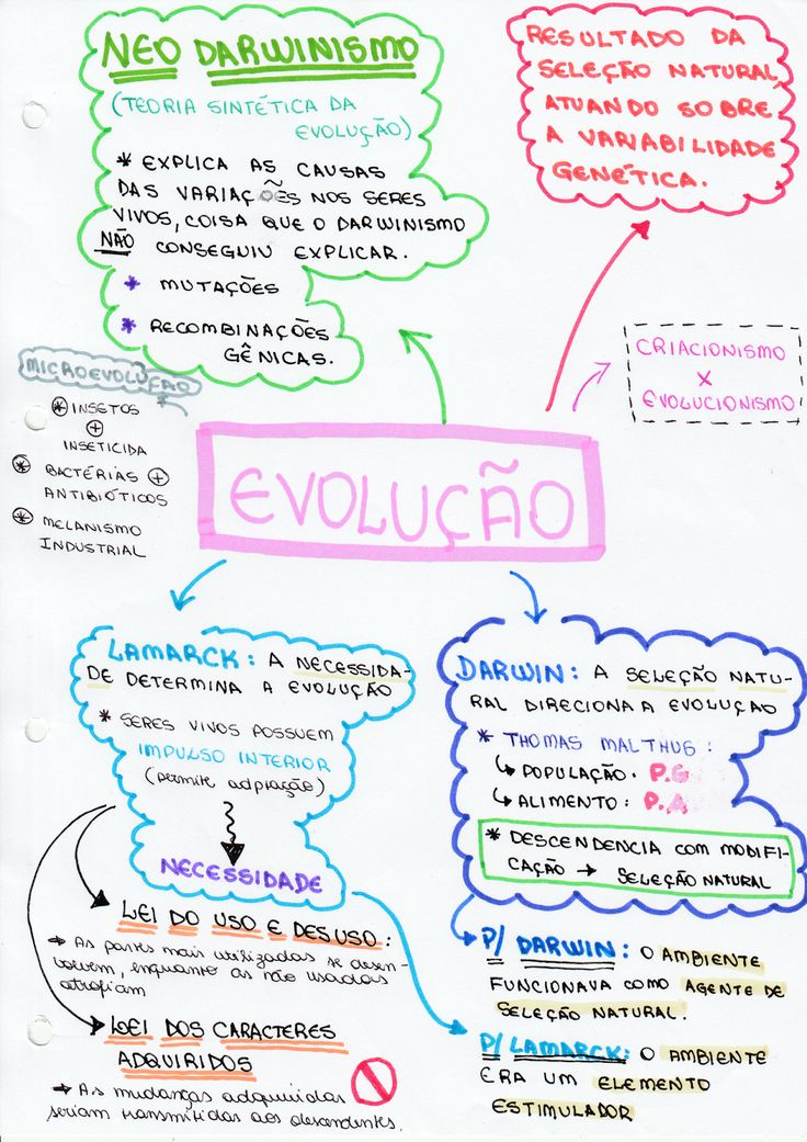 Mapa Mental Biologia - Evolução ~ Vestibulândia