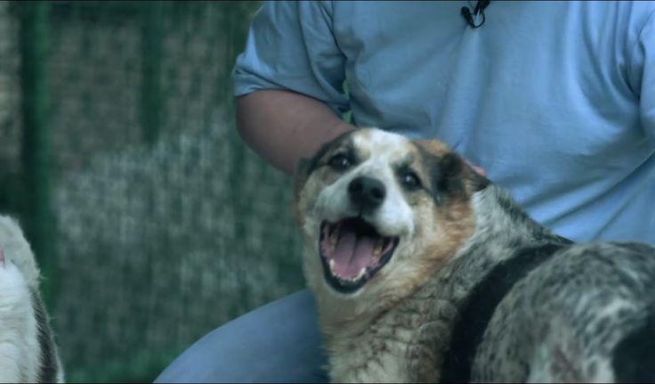 Московская дворняга. Планета собак 🌏 Моя Планета