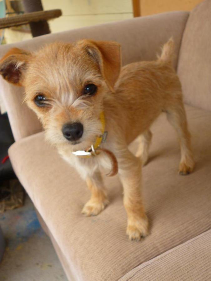 Small terrier mix small terrier & kleine terriermischung