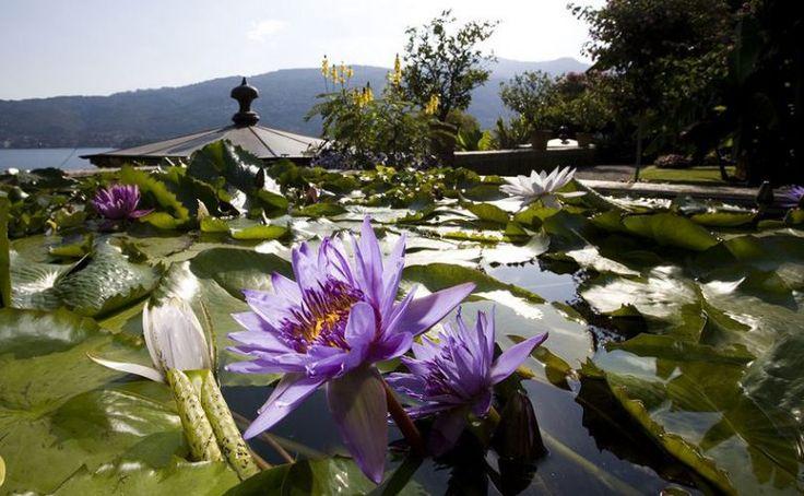 La fioritura delle ninfee sul Lago Maggiore!