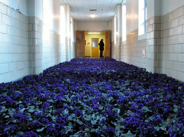 Bloom: 28,000 Potted Flowers Installed at the Massachusetts Mental Health Center multiples installation flowers before it was demolished