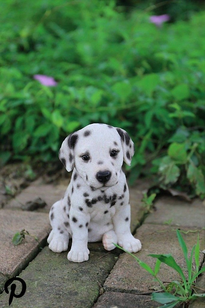 Dalmatian Puppy Dalmatian Puppies For Sale Dalmatian Puppy Cute Puppies
