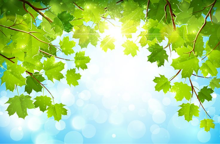 Sunshine Parasol Tree Background Vector | Free Vector Graphic Download