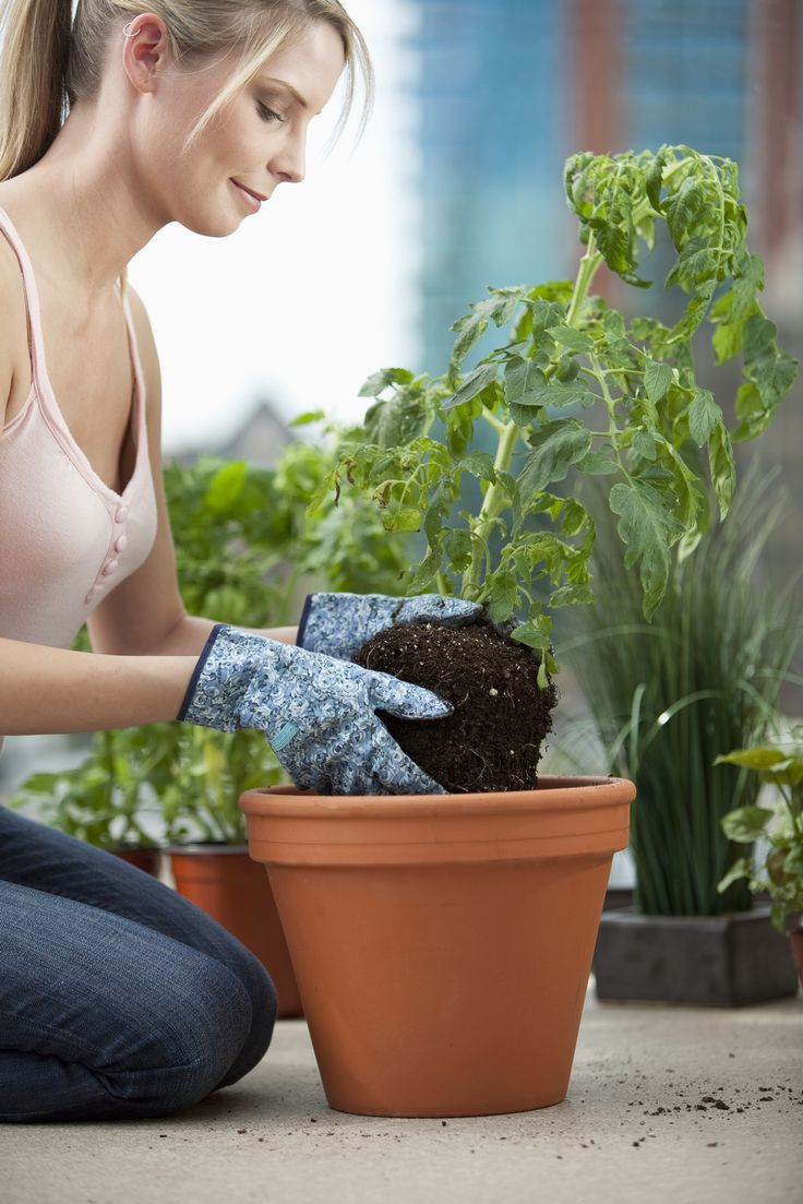 10 Essential Gardening Tools for Apartment Dwellers