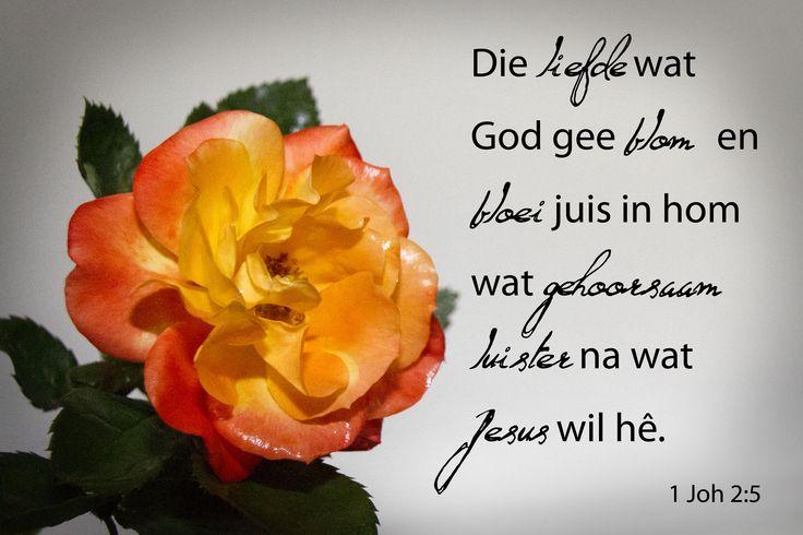 Dag 170 1 Joh 5:2  Die liefde wat God gee blom en bloei juis in hom wat gehoorsaam luister na wat Jesus wil hê.
