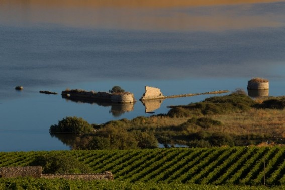 View from Cellar Planeta Ulmo #Sicily