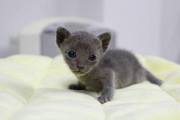 โปรแกรมว คซ นล กแมว ข อม ลเก ยวก บน องหมาท กสายพ นธ All Dog Breed Information In 2021 Cat Breeds Korat Cat Korat