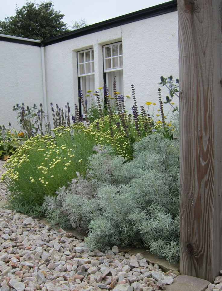 90 best images about perennials on pinterest gardens for Garden design east lothian