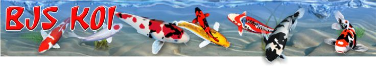 Koi retail outlet offering a huge range of Japanese Koi Carp for sale and specialist equipment and accessories.