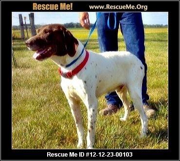 Gary— Nebraska German Shorthaired Pointer Rescue — ADOPTIONS — RescueMe.Org