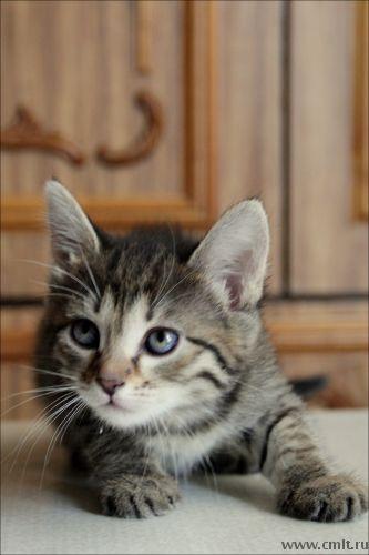 Очаровательные котята-девочки
