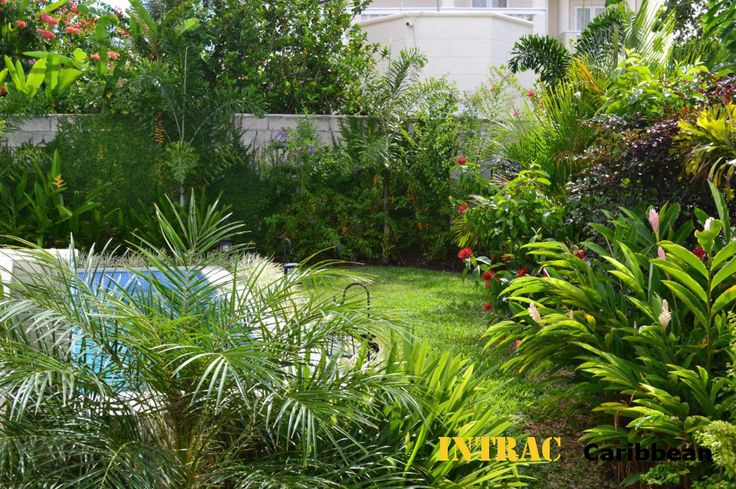 Tropical Garden In The Caribbean Landscaping Pinterest