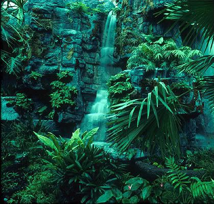 Beautiful African Rainforest/Jungle in the Congo