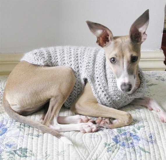 Crochet Dog or Puppy Sweater  Size Small   Custom sized to fit your pooch!  Made by BlueBarnQuilts on Etsy