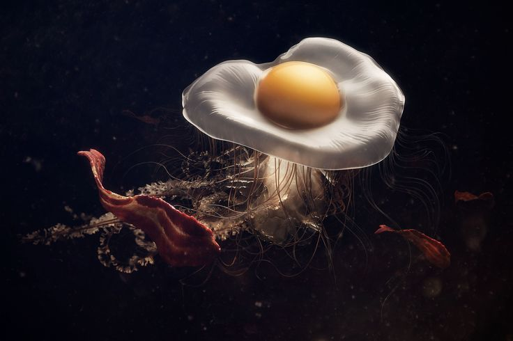 """Check out this @Behance project: """"Eggfish & Bacon""""…"""