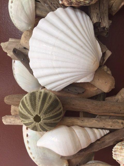 Conchas y estrellas de mar corona de Driftwood playa Shell