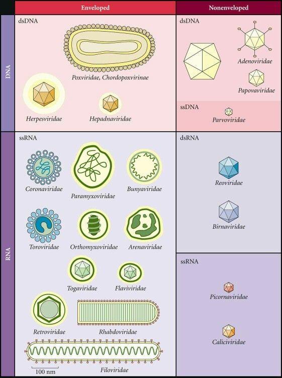 Virus classification                                                                                                                                                                                 Mehr