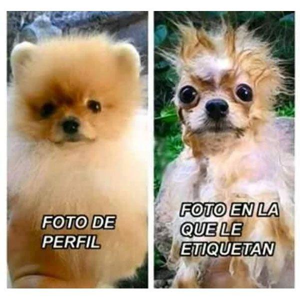 Foto en la que te etiquetan. #humor #risa #graciosas #chistosas #divertidas