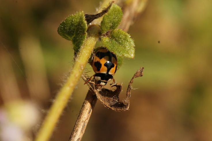 Photo Ladybug... by Pierre Anex on 500px