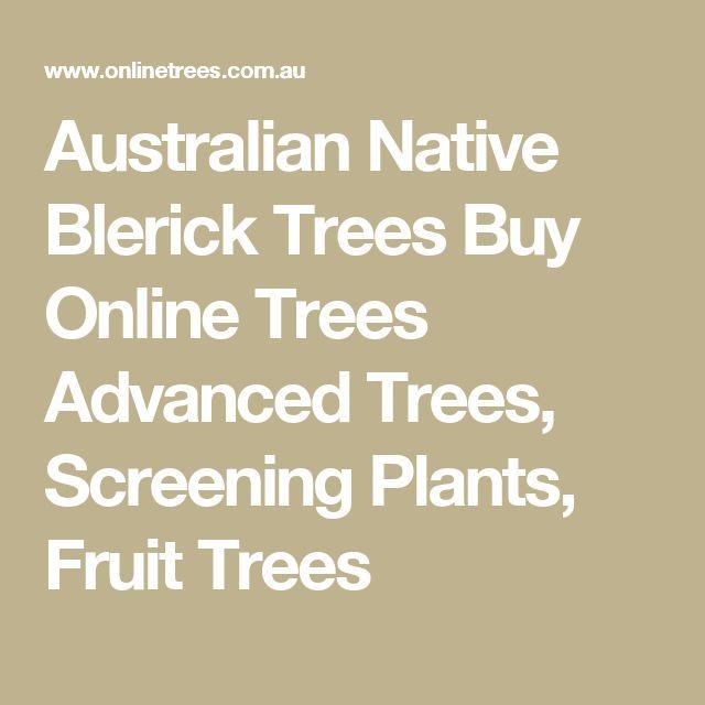 Australian Native Blerick Trees Buy Online Trees Advanced Trees, Screening Plants, Fruit Trees