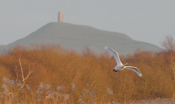 A Glastonbury Tor mindössze 158 méter magas, ez az egyik legnagyobb spirituális hely az országban. Számos mítosz és legenda kapcsolódik hozzá. A Torhoz társították az alvilág urát Gwyn ap Nudd-ot, a későbbi tündérek királyát. A Tor vált az Annwn másvilág avagy a tündérek földjének az Avalon bejáratának képviselőjévé. A grál kutatók szerint a Szent Grál egyik lehetséges helyszíneként is felmerül.