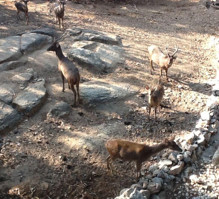 Deer in the enclosure