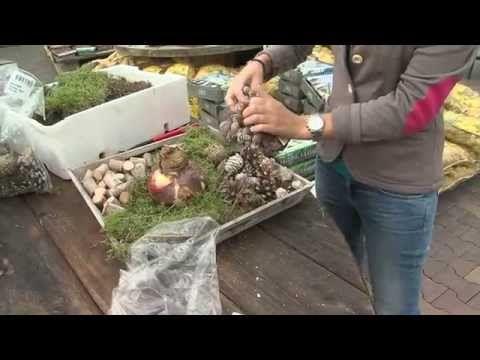 Amaryllis decoratief verwerken in glas, lantaarn of op dienblad door Intratuin Halsteren - YouTube