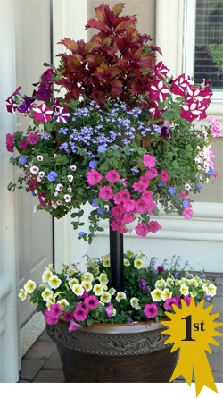 I'm DOING this !! So Beautiful! Planter with stem basket - A living topiary with flowers!