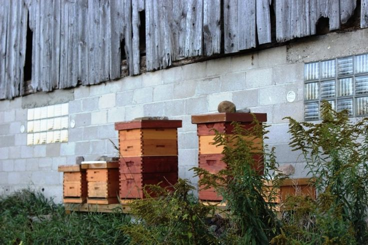 Bee hives located at Vibrant Farms certified organic farm near Kitchener-Waterloo in Baden, Ontario Canada.