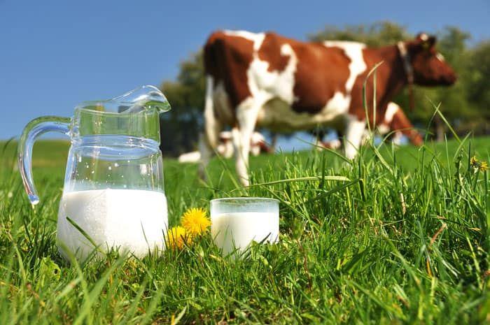فوائد و مكونات الحليب البقر والقيمة الغذائية In 2020 Cow Milk Benefits Milk Benefits Cow S Milk