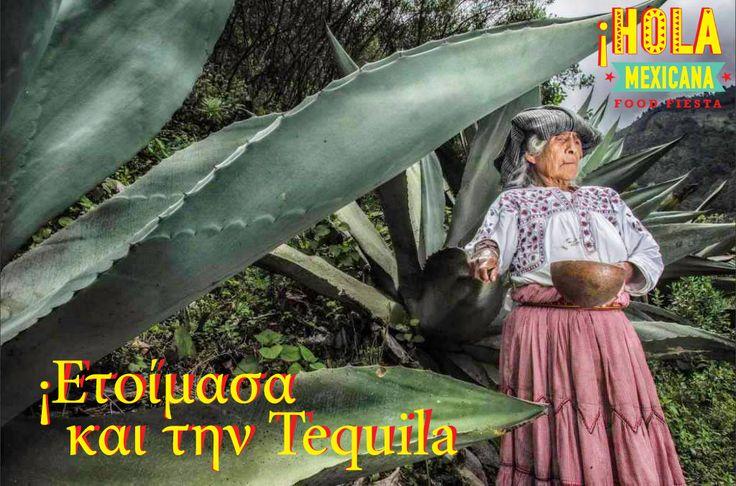 Στο #HolaMexicana αγαπάμε την τεκίλα και μαθαίνουμε γι αυτη ... Στις περιοχές που συναντάμε τις μπλε αγαύες, το φυτό δηλαδή (που ανήκει στην οικογένεια των lilies και όχι του κάκτου όπως πολλοί νομίζουν) που μπορεί να δώσει τεκίλα.