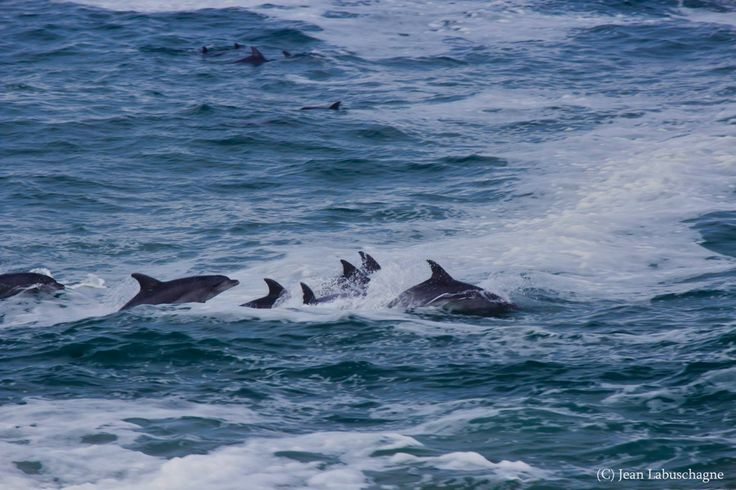 Dolphins by Jean Labuschagne on 500px
