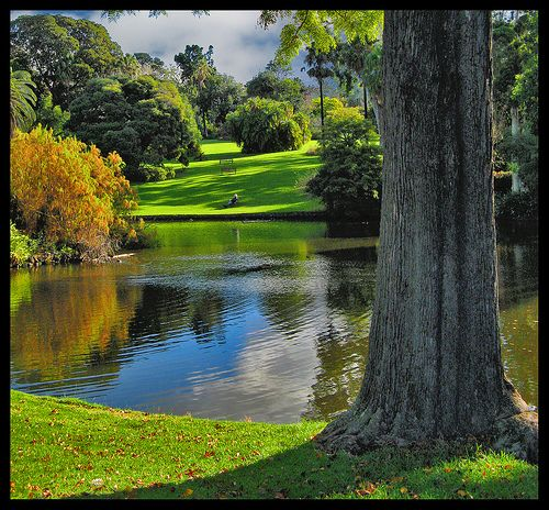 Take a walk through the Royal Botanic Gardens, Melbourne
