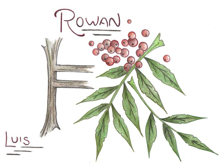 Celtic Rowan Tree | CELTIC TREE MONTH, ASTROLOGY & OGHAM SYMBOL TO MATCH – Luis ...