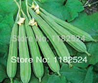 Бросился уличные растения очень лёгкая мини сад чайник горшки гибридный хребет геркулес овощи семена ( 30 семена )