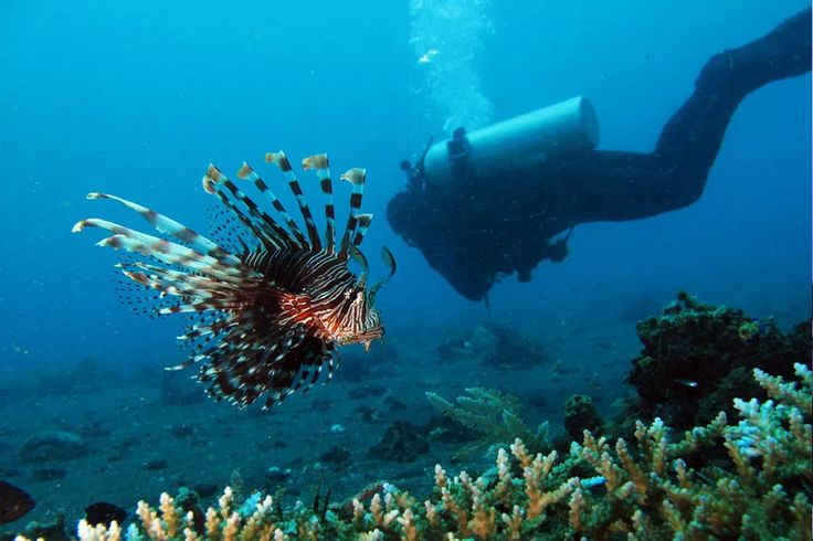 Wonderful Indonesia - Foreign Tourists from Visa Free Countries can Now Enter Indonesia through North Sulawesi