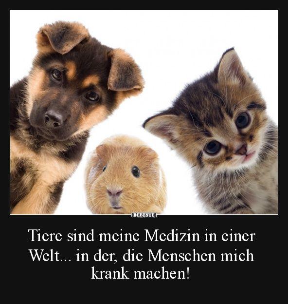Tiere sind meine Medizin in einer Welt.. | Lustige Bilder, Sprüche, Witze, echt… – toni