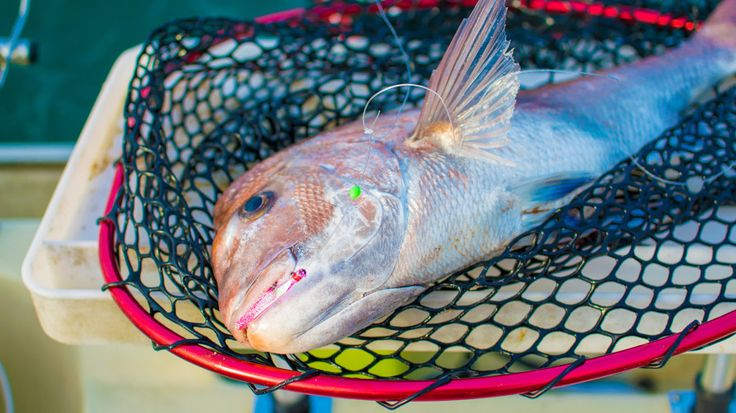 best snapper rigs for port phillip bay