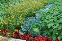 Légumes et potager - Associations gain de place de légumes, plantes et fleurs au potager