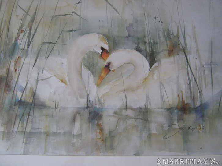 Swans by Jan Kooistra Dokkum (the Netherlands)