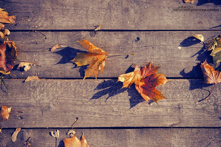 """Autumn Leaves From """"Autumn"""" photo prints collection. Interior photo print."""